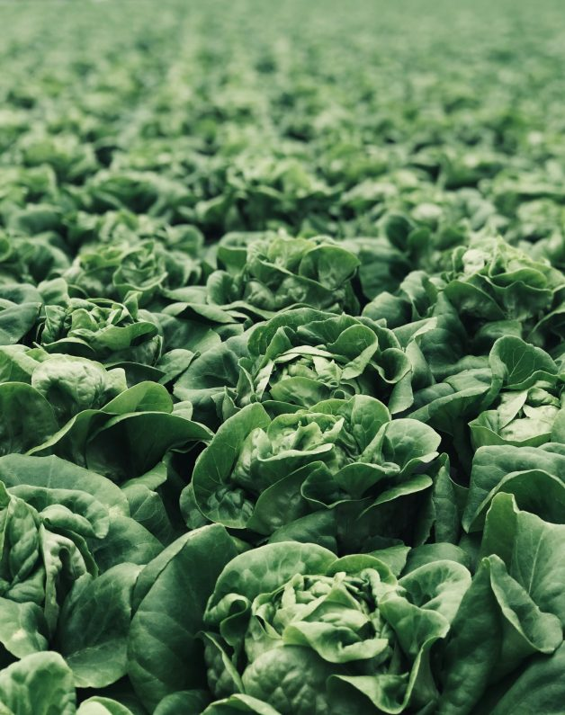 cabbage for fertility salad