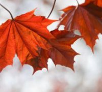 0926-fall-tips-5-a-day_vg-300x199